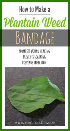 How to Make a Plantain Weed Bandage. How to make an amazing bandage that promotes wound healing, prevents scarring, and prevents infection. All from Mother Nature, no medications! realfoodrn.com