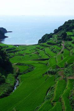 Terraced rice paddies in Hamanoura, Saga, Japan