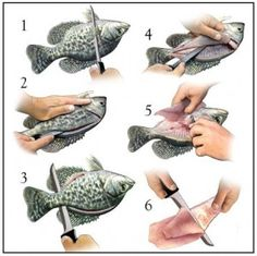 How to Fillet Crappie / Bluegill - Apparently there are so many of these little guys in the lakes of Canada and Alaska. Not a lot of meat on them but easy to catch when nothing else is biting Crappie Fishing Tips, Carp Fishing, Best Fishing, Saltwater Fishing, Kayak Fishing, Ice Fishing, Fishing Tricks, Fishing Knots, Fishing Stuff