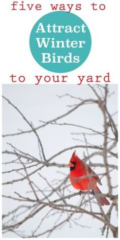 Five Ways to Attract Winter Birds to your yard.