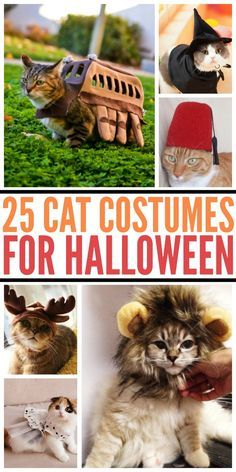 Looking for cat costumes? Check out our list of 25 Amazing Halloween Costumes for Cats here! http://www.budgetearth.com/25-cat-costumes-for-halloween/