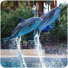Siegfried & Roys Secret Garden and Dolphin Habitat – The Mirage Hotel and Casino (11-6:30)