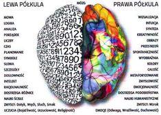 polkule mozgowe- ktora za co:) Sensory Integration, School Staff, Learning Process, Anatomy And Physiology, Aspergers, Speech And Language, Self Improvement, Psychology, Coaching