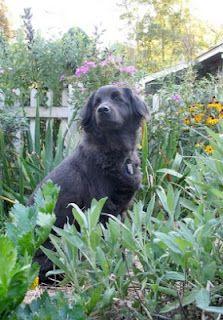 Garden Plants that Repel Ticks - Lavender, Lemongrass, Geranium, Catnip, Sage, Mints