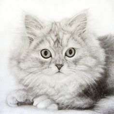 Pencil drawing of a kitten