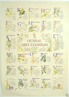 'Herbal Abecedarium' Herb Poster, Kitchen Witch, Hedge Witch, Herbalism