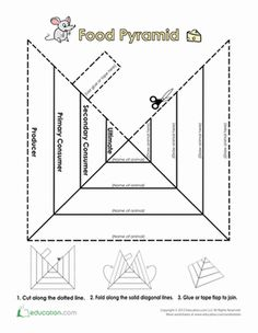Third Grade Life Science Coloring Worksheets: Trophic Level Pyramid