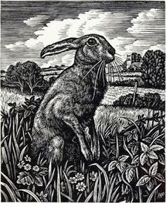 March Hare by Howard Phipps, Wood Engraving. Another hare, I tend to like the same things, but had to be 'Pin'd' as it is so good Art And Illustration, Illustrations, Linocut Prints, Art Prints, Block Prints, Ant Drawing, Into The Fire, Rabbit Art, Bunny Art
