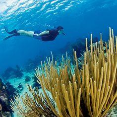 Hol Chan Marine Reserve, Belize - 10 Top Spots to Snorkel - Coastal Living