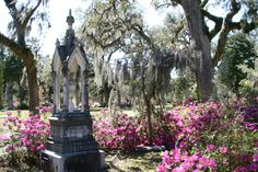 Bonaventure Cemetery, Savannah, GA rumble of thunder under the Spanish moss @Kara Zielinski