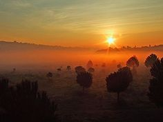 Sunrise in fog.. (Nejdet Duzen) Tags: sun mist color tree nature topf25 pine sunrise turkey topf50 topf75 trkiye sis topf150 topf100 soe breathtaking izmir am manzara gne aa clour turkei naturesfinest renk doa gndoumu 35faves 25faves abigfave platinumphoto anawesomeshot impressedbeauty superbmasterpiece favemegroup5 theunforgettablepictures