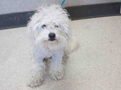 ~ Animal ID #A1389318 ‒ I am a Male, White Miniature Poodle mix. The shelter does not know how old I am. I have been at the shelter since May 19, 2015. Orange County Animal Care Center ‒ (714) 935-6848 561 The City Drive South Orange, CA Fax: (714) 935-6373 https://www.facebook.com/OPCA.Shelter.Network.Alliance/photos/pb.481296865284684.-2207520000.1432226201./823590481055319/?type=3&theater
