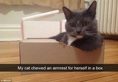 One cat looked very relaxed after they chewed an armrest for themselves from a cardboard b...