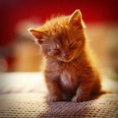 I think this kitten is feeling sleepy!