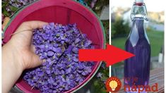 The healing spring violet syrup has a miraculous power: 1 teaspoon and forget what is cough, stress and headache! Jaba, Miraculous, Healing, Homemade, Spring, Plants, Food, Forget, Relax