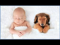 Discover the different causes of skin irritation with dogs and natural remedies for dog skin allergies. Visit the Canna-Pet site today to learn more! Baby Quiz, Dog Skin Allergies, Gato Animal, Short Dog, Puppy Party, Expecting Baby, Dog Walking, All Dogs, Pet Shop