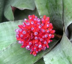 red tropical plant, Montreal Botanical Gardens