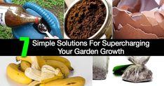 7 Simple Solutions For Supercharging Your Garden Growth 7 items that can supercharge garden soil Backyard Vegetable Gardens, Garden Soil, Garden Tips, Veg Garden, Garden Ideas, Egg Shells In Garden, Dried Bananas, Blueberry Bushes, Organic Gardening Tips