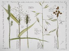Middlewood Journal: Spring Grass and Spiders - sketches & countryside Garden Journal, Nature Journal, Sketchbook Inspiration, Art Sketchbook, Botanical Drawings, Botanical Prints, Watercolor Journal, Watercolor Paintings, Nature Sketch
