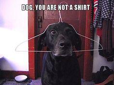 ahahaha not a shirt #dog