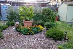 How You Can Turn New York City's Vacant Lots into Community Gardens Pinterest Garden, Urban Park, New York City, The Neighbourhood, Around The Worlds, Community, Canning, Gardens, Plants