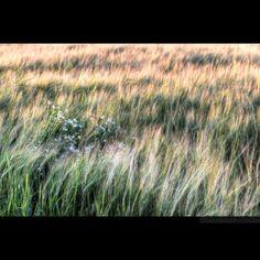 Fields. Vasteras. Sweden 2016