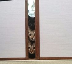 Cats, Surprising Their Synchronicity (36 Photos)