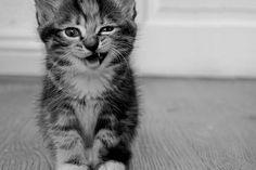 Cats Animals Funny Monochrome Kittens