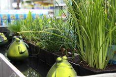 Sierlijke waterplanten