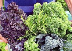 Lehtikaalin kasvatus on antoisaa, sillä kasvin maku ja rakenne muuttuvat kasvuvaiheen mukaan. Kasvatus onnistuu kukkapenkissä, kasvimaalla ja ruukussa. Tutustu Viherpihan ohjeeseen ja kokeile lehtikaalin kasvatusta.