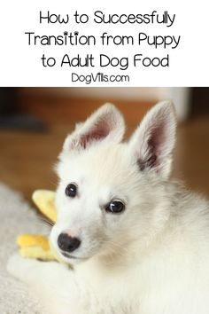 Your sweet pooch is growing up quickly, and it's time to transition from puppy to adult dog food. Check out 5 tips for a smoother switch!