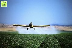 Alimentos têm resíduo de agrotóxico acima do permitido, diz Anvisa