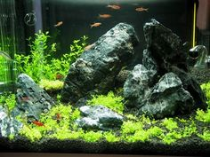 Aquascaping Blog: NANO TANK