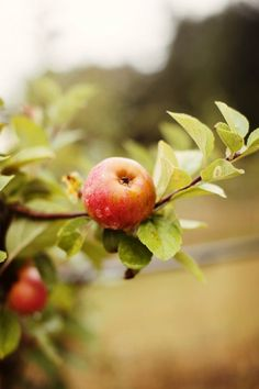 Fall checklist, things to do this fall, apple picking,