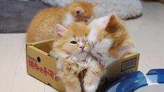 These two who are so cute THEY can barely stand it, either. | 27 Kittens