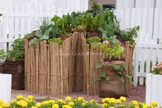 Raised bed vegetables including chard, lettuces ... | Garden Info & I ...