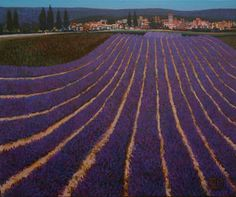 Ton Dubbeldam Souvenir de Provence