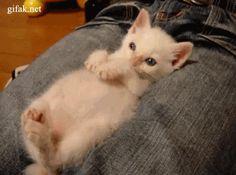 funny-cat-gifs-042-007.gif