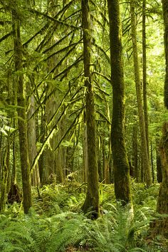 forest on Vancouver Island #woodland