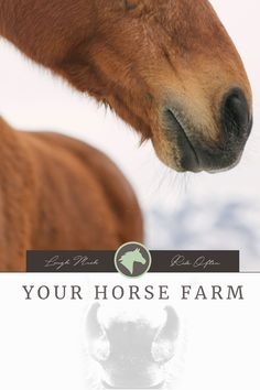 """""""I've tried my share of deShedding tools over the years but I'm always looking for the new, magic tool that will make grooming quick and easy! My deShedding tools have evolved over the years..."""" #equestrian #horses #yourhorsefarm #lifestyle #blog #shedding #winter"""