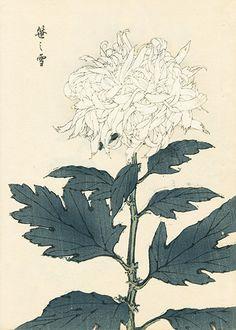 Keika Hasegawa Chrysanthemum Wood Block Prints 1st Edition 1893 $95