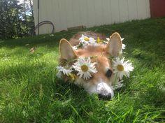 Картинка с тегом «dog, flowers, and aesthetic»