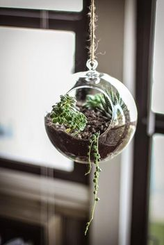 Making your own hanging garden at home with this  suspended terrarium from Adventures in Cooking.