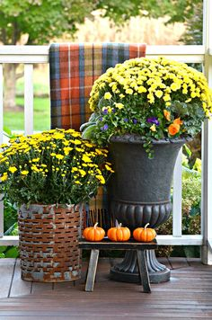 Decorating for fall in a small space can be charming! Here are some great ideas! OUTDOOR SMALL SPACE DECORATING- You don''t need a big outdoor space to have fabulous fall decor outsided around your home! Autumn Decorating, Porch Decorating, Decorating Tips, Decorating Websites, Fall Home Decor, Autumn Home, Living Room Small, Small Porches, Front Porches