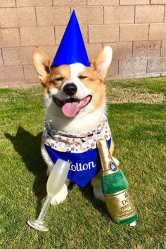 So today I turn 51. Whoa. I was 43 when I started The Daily Corgi, eight years ago. Where the last eight years went, I don't rightly know!   Colton I could spin a fabulist tale about my derring do, but there was little derring and even less do. I oughtta know, I was [...]