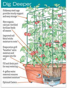 Tomato Planter - Organic Tomato Success Kit | Gardeners.com