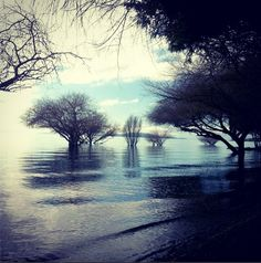 #LagoRanco #Chile <3