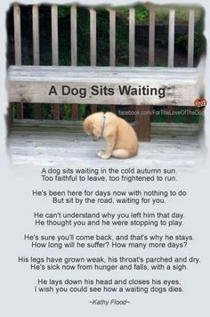 A dog sits waiting...heartbreaking:'(