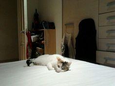 Elena,s bed
