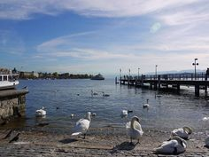 Zurich, Switzerland, Pretty, Holiday, House, Vacations, Home, Haus, Holidays Events